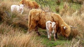 Стадо коров пася на зеленом луге Стоковая Фотография