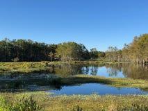 стадо птиц болота стоковые фото