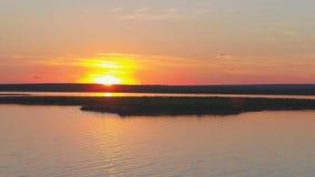 Стадо птиц на предпосылке красочного неба Заход солнца на реке Остров чаек Птицы летают на заход солнца, воздушный Стоковое Изображение