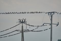 Стадо птиц сидит на линии электропередач Стоковое Фото