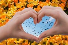Стадо птиц увиденных за сердцем сформировало руку стоковые фото