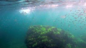 Стадо рыб под водой сток-видео