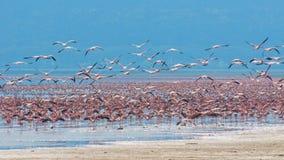 Стаи фламингоа Стоковые Изображения RF