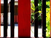 Стальная деревянная загородка, предпосылка лозы плюща взбираясь Стоковое Изображение
