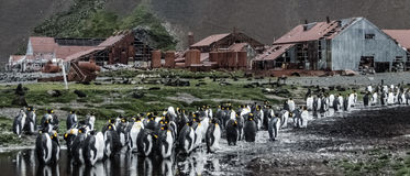 Станция китоловства Stromness стоковая фотография rf