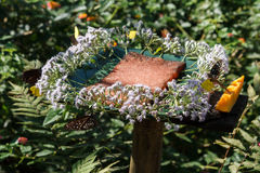 Станция нектара цветка на парке бабочки KuangSi prabang luang Лаоса Стоковые Фотографии RF