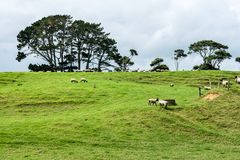 Станция овец Новой Зеландии стоковое фото rf