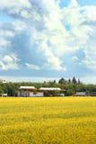 станция рапса нефти урожая Стоковая Фотография