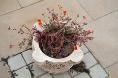 Старая античная ваза стиля на улице Стоковое Изображение RF