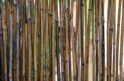 Старая бамбуковая предпосылка стены Стоковые Изображения RF
