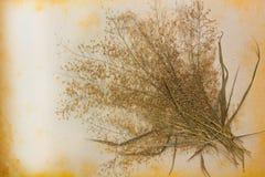 Старая бумага и высушенные цветки. Стоковое Изображение RF