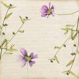 Старая бумажная рамка высушенных цветков и заводов Стоковые Фото