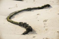 Старая веревочка на пляже Стоковые Изображения RF