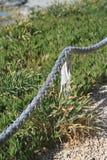 Старая веревочка на пляже Стоковое фото RF