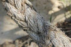 старая веревочка Стоковые Изображения RF