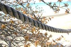старая веревочка Стоковое Изображение RF