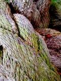 старая веревочка Стоковая Фотография