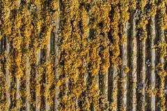 Старая взборозженная предпосылка мха древообразная Стоковая Фотография