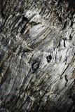 Старая выдержанная серая древесина Стоковое Изображение RF