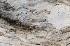 Старая выдержанная деревянная поверхность Стоковые Фото