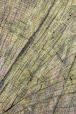 Старая выдержанная треснутая битумная железнодорожная поверхность стороны поперечного сечения слипера покрытая с водорослями и ли Стоковое Изображение RF