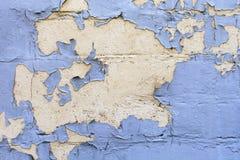 Старая голубая краска обстреляна на стену Цветы сушат картину простирания стоковое изображение