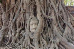 Старая голова Будды внутри дерева Стоковая Фотография