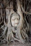 Старая голова Будды внутри дерева Стоковое фото RF