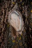 старая грубая древесина текстуры Деревянная текстура Деревянная предпосылка детализируйте вал лучи предпосылки закрывают вал валк Стоковое фото RF