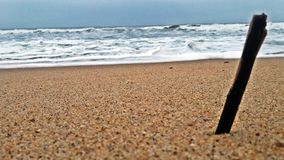 Старая деревянная ветвь дерева на песке пляжа на побережье морской воды в au стоковые изображения