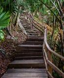 Старая деревянная и каменная лестница водя вверх по холму в джунглях стоковые фото