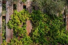 Старая деревянная перерастанная изгородь иллюстрация штока