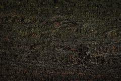 Старая деревянная предпосылка текстуры или хобота Деревянный материал от естественной влажной поверхности стоковые изображения