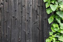 Старая деревянная стена с зелеными листьями стоковые изображения rf