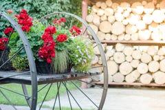 Старая деревянная тележка на деревне с цветками на ей Стоковые Фотографии RF