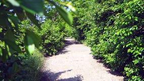 Старая дорога асфальта с зелеными лугами и фруктовыми деревьями вокруг Тоннель фруктовых деревьев видеоматериал
