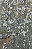 Старая доска покрытая с мхом Стоковая Фотография RF