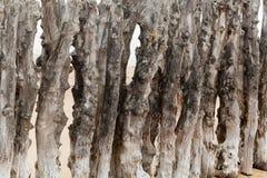 Старая древесина groyne Стоковые Фотографии RF