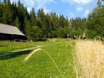 Старая деревня с деревом и зерном Стоковые Фотографии RF