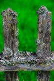 Старая деревянная загородка покрытая с moss-2 Стоковые Фотографии RF