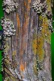 Старая деревянная загородка покрытая с moss-1 Стоковое Изображение