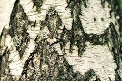 Старая деревянная картина предпосылки текстуры дерева стоковые изображения rf