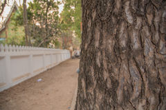 Старая деревянная кора дерева для предпосылки стоковое фото rf