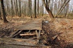Старая деревянная дорога Лес в предыдущей весне Стоковые Изображения RF