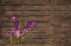 Старая деревянная предпосылка с фиолетовым или фиолетовым крокусом grunged Стоковая Фотография RF