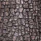 Старая деревянная предпосылка текстуры дерева, картина расшивы Стоковое фото RF