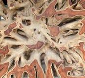 Старая деревянная предпосылка Стоковые Изображения