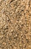 Старая деревянная текстура дерева Стоковая Фотография RF