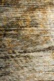 Старая деревянная текстура планки Стоковое Изображение RF