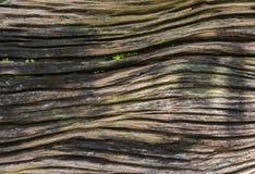 Старая деревянная текстура Стоковые Изображения RF